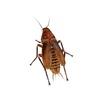 15 07 31 2 cockroach21200 4