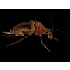 15 17 09 323 cockroachs1 4