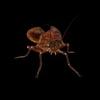15 17 15 945 cockroachs5 4