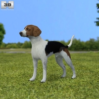 English Foxhound 3D Model