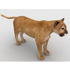 09 09 49 352 mountain lion5 4