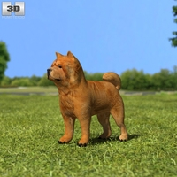 Chow Chow 3D Model