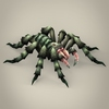 04 26 25 620 game ready spider tarantula 06 4