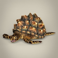 Game Ready Mountain Tortoise 3D Model