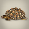 04 26 38 830 game ready mountain tortoise 04 4