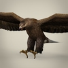 04 27 03 738 game ready realistic eagle 01 4