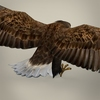 04 27 14 768 game ready realistic eagle 05 4