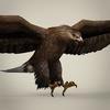 04 27 16 832 game ready realistic eagle 06 4
