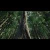10 13 35 477 forest scene 7 1 4