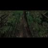 10 13 36 621 forest scene 7 2 4