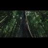 10 13 38 537 forest scene 7 3 4