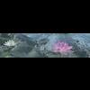 10 18 12 577 lotus 1 4