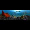 10 21 24 273 underwater world 001 3 4
