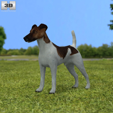 Fox Terrier 3D Model
