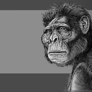 08 australopithecus  mio small