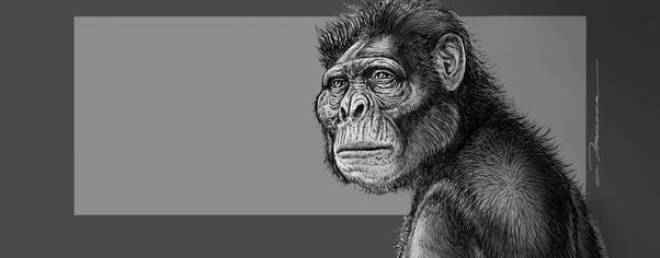 08 australopithecus  mio wide