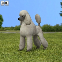 Poodle 3D Model