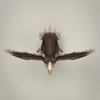 21 43 59 613 game ready fantasy vulture 08 4
