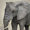 21 44 02 671 realistic asian elephant 02 4