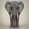 21 44 03 589 realistic asian elephant 03 4