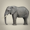21 44 04 529 realistic asian elephant 04 4