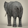 21 44 05 417 realistic asian elephant 05 4