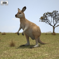 Eastern Grey Kangaroo Joey 3D Model