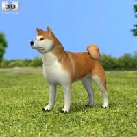 Akita Inu 3D Model