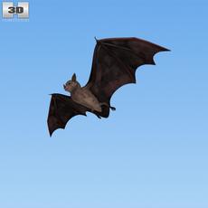 Common Bat 3D Model