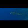 23 37 07 317 large coral fish pack 1 3d model fbx unitypackage mat 2c56c1d0 6f76 44ac 94b1 0577be8e20da 4