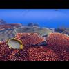 23 37 08 231 large coral fish pack 1 3d model fbx unitypackage mat 5d069700 2e69 488d b981 fbaa216a8125 4