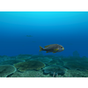 23 37 09 302 large coral fish pack 1 3d model fbx unitypackage mat 5f1a399c db60 405a a781 b35fdd32e2f8 4
