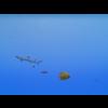 23 37 12 81 large coral fish pack 1 3d model fbx unitypackage mat 15c505de b826 4b7d b930 8deb2328772b 4