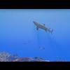 23 37 13 391 large coral fish pack 1 3d model fbx unitypackage mat 41e2aa95 7a9a 4714 b4c5 767b0fb244c8 4