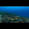 23 37 18 651 large coral fish pack 1 3d model fbx unitypackage mat 24064e53 1cb5 4431 b1e9 3ea22c20b4fd 4