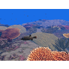 23 37 19 747 large coral fish pack 1 3d model fbx unitypackage mat 58627bdd 297c 4761 8b71 59a93b46debc 4