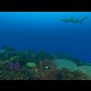 23 37 20 769 large coral fish pack 1 3d model fbx unitypackage mat ca3f775c 8ab8 4e10 9e8f 4aabd62b03e8 4