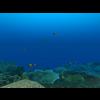 23 37 23 110 large coral fish pack 1 3d model fbx unitypackage mat e07ef715 a5b1 4a72 b0d2 df262f8eeb8d 4