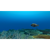 23 37 24 111 large coral fish pack 1 3d model fbx unitypackage mat f9daa22e 72f1 4e40 8f18 9831a78fd004 4