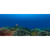 23 37 25 61 large coral fish pack 1 3d model fbx unitypackage mat feee6382 e789 49e5 889a 61cc9ee383a7 4