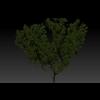 23 38 18 103 fantasty tree 4