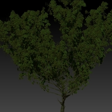 Fantasy Tree with displacement map 3D Model