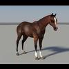 19 46 41 309 horse2 4