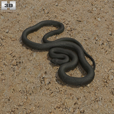 Green Anaconda 3D Model