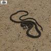 21 45 42 580 grass snake 600 0001 4