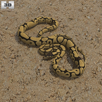 Common Python 3D Model