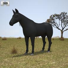 Rocky Mountain Horse 3D Model