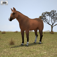Thoroughbred Horse 3D Model