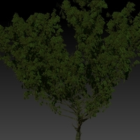 Fantasty tree cover