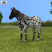 Knabstrupper Horse 3D Model